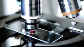Stäng sig upp av ett mikroskop stock video