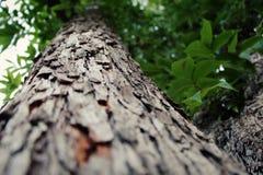 Stäng sig upp av ett träd med ett smalt djup av fältet på kallt väder arkivbild