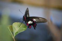 Stäng sig upp av fjäril på ett blad arkivfoton