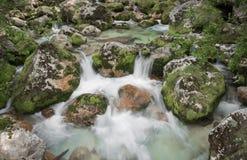 Stäng sig upp av floden Lepenjica i hjärtan av den Lepena dalen, Slovenien royaltyfri foto