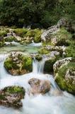 Stäng sig upp av floden Lepenjica i hjärtan av den Lepena dalen, Slovenien arkivbild