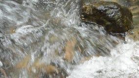 Stäng sig upp av floden som flödar på starr och, zooma ut i skog arkivfilmer
