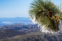 Stäng sig upp av fryst sörjer visare på en kall vinterdag överst av Mt Hamilton, San Francisco Bay område i bakgrunden, San Jose, royaltyfri foto