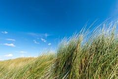 Stäng sig upp av gräs på den sandiga stranden arkivfoton