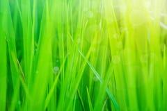 Stäng sig upp av grönt gräs med solljus och bokehbakgrund royaltyfria bilder