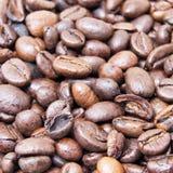Stäng sig upp av grillade kaffebönor med vit bakgrund med utrymme för text att att användas som bakgrund eller textur Arkivfoto