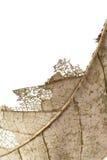 Stäng sig upp av hösten torkade bladet, bryna brun lövverk, makrosikt på textur vissnade höstsidor som isoleras på vit bakgrund Royaltyfri Foto