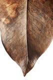 Stäng sig upp av hösten torkade bladet, bryna brun lövverk, makrosikt på textur vissnade höstsidor som isoleras på vit bakgrund Arkivfoto