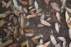 Stäng sig upp av höstsidor på jordningen Royaltyfria Bilder