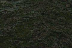 Stäng sig upp av havsväxt i hamn arkivfoton