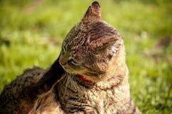 Stäng sig upp av katten som sitter, och skrapa hans huvud med tafsa på den gröna bakgrunden royaltyfria foton