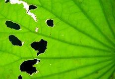 Stäng sig upp av leaves Royaltyfri Bild