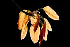 Stäng sig upp av leaves Royaltyfria Foton