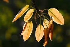 Stäng sig upp av leaves Royaltyfri Foto