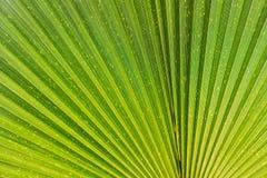 Stäng sig upp av livlig tropisk grön bladtextur royaltyfria foton
