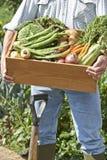 Stäng sig upp av man på odlingslott med asken av hemmet - fullvuxna grönsaker Royaltyfri Bild