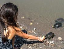 Stäng sig upp av matande sköldpaddor för ung flicka på stranden fotografering för bildbyråer