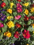 Stäng sig upp av nya ljusa färgrika blommor och sidor Arkivbilder