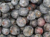 Stäng sig upp av nya mogna söta blåbär, naturlig bakgrund royaltyfria foton