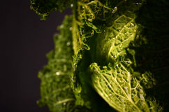 Stäng sig upp av organisk savojkål på träbakgrunden Royaltyfria Foton