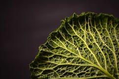 Stäng sig upp av organisk savojkål på träbakgrunden Royaltyfri Bild