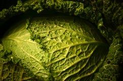 Stäng sig upp av organisk savojkål på träbakgrunden Arkivfoto