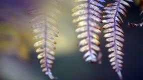 Stäng sig upp av ormbunkeväxten med oskarp bakgrund royaltyfri foto