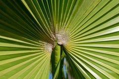 Stäng sig upp av palmträdbladkanter arkivbild