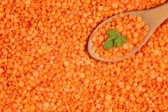 Stäng sig upp av rå dehulled bakgrund för röd lins med träskeden och persiljabladet Royaltyfria Foton