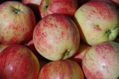 Stäng sig upp av röda äpplen Royaltyfri Foto