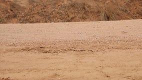 Stäng sig upp av skor och ben av det afrikanska barnet som går till skolan stock video