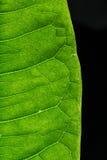Stäng sig upp av texturen på ett blad Fotografering för Bildbyråer