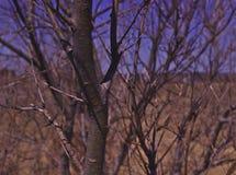 Stäng sig upp av träd & blå himmel 3478 royaltyfria bilder