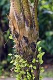 Stäng sig upp av träd i Rainforest för El Yunque Arkivbilder