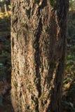 Stäng sig upp av trädstammen med skället på en solig dag Fritids- natur, meditation, textur royaltyfri foto