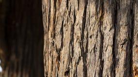 Stäng sig upp av trädstammen och dess texturerade skäll royaltyfri fotografi