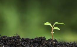 Stäng sig upp av växten som spirar från jordningen med bokehbakgrund för livlig gräsplan Arkivfoto
