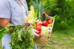 Stäng sig upp bärande handskar för kvinna med nya grönsaker i asken I Royaltyfria Foton