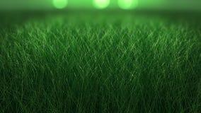Stäng sig upp bakgrund av nytt tjockt gräs Fotografering för Bildbyråer