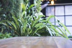Stäng sig upp bild av en trätabell med suddighetsbokeh av den gröna naturen fotografering för bildbyråer