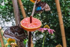 Stäng sig upp bild av ett härligt färgrikt fjärilssammanträde på en blomma royaltyfri bild