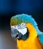 Stäng sig upp bild av papegojan Arkivfoto