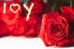 Stäng sig upp bild av röda rosor och vattendroppar på vit bakgrund Royaltyfri Fotografi