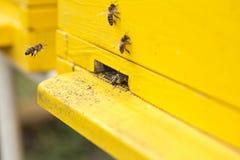 Stäng sig upp bin som flyttar sig in i en bikupa Arkivfoto