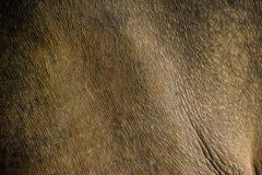 Stäng sig upp den Horned noshörningen för indier en, noshörningunicornis arkivfoto