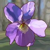 Stäng sig upp den målade purpurfärgade violetta blomman i en skog Arkivbild
