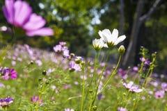 Stäng sig upp den vita blomman Royaltyfria Bilder