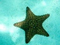 Stäng sig upp detaljen av kuddehavsstjärnan i Tobago Cays, Marine Park:  Saint Vincent och Grenadinerna östligt karibiskt. Arkivbilder
