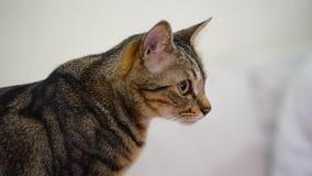 Stäng sig upp en skjuten katt royaltyfria bilder