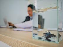 Stäng sig upp fisk i fiskbehållare med affärsmannen som arbetar på hans skrivbord arkivbild